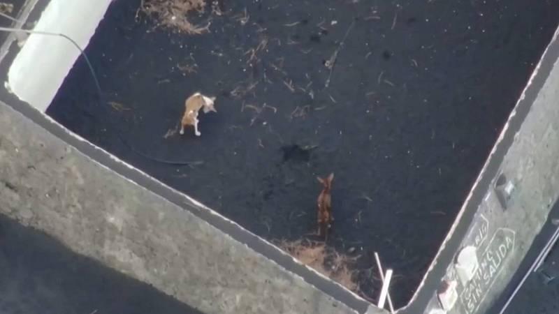 Un dron descubre tres perros en un depósito de agua en Todoque