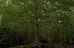 Metrópolis - Cabecera de Metrópolis