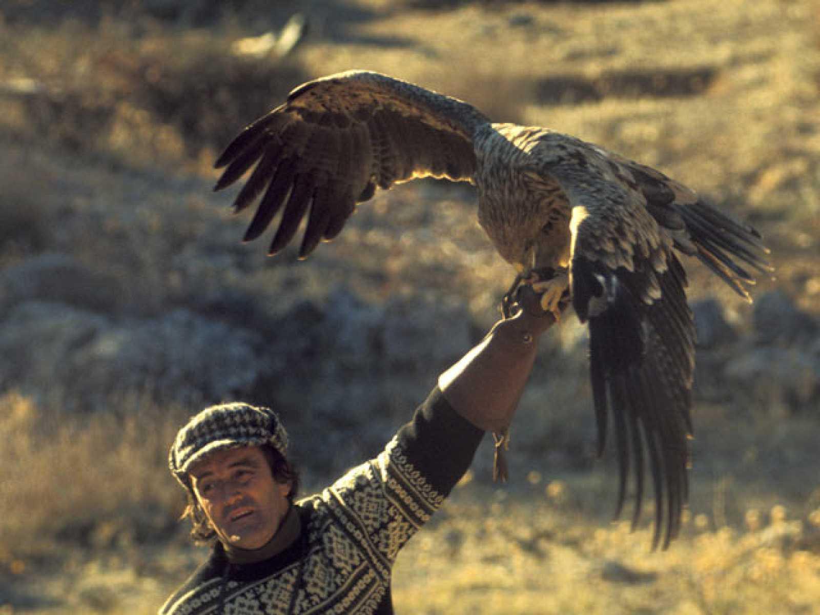 La doma del águila real para cazar raposos