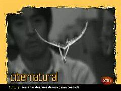 Natural - La primavera se va con una mariposa-robot