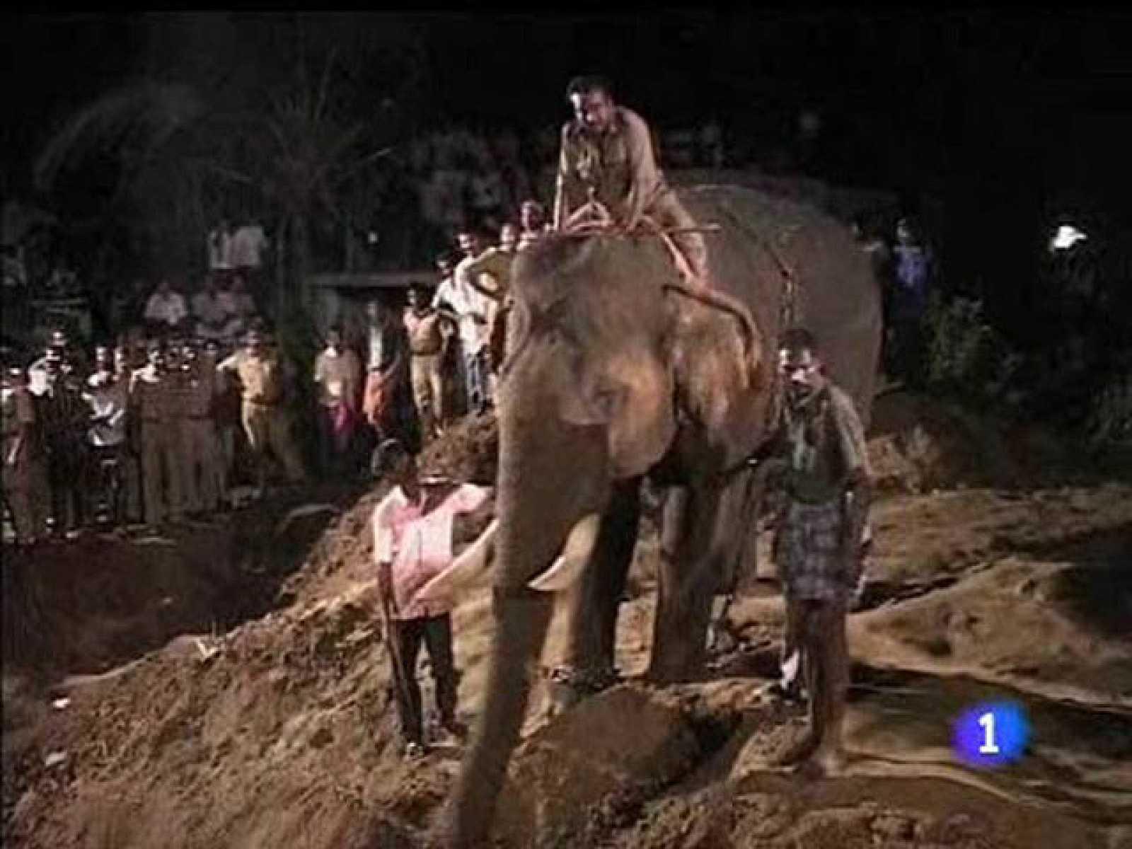Rescatan a un bebé elefante de un agujero