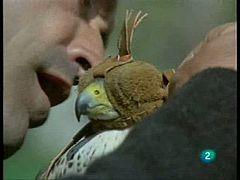 El hombre y la tierra - Elementos imprescindibles para el adiestramiento del halcón