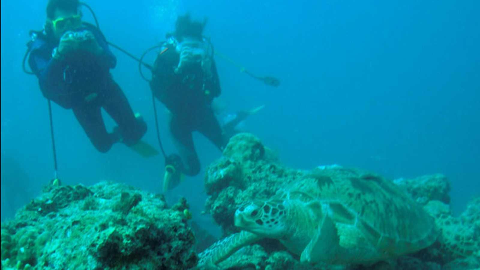 Jacques Cousteau en Informe Semanal