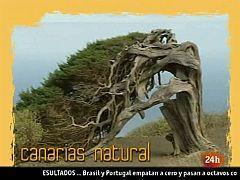 """Natural - """"Recicleta"""""""