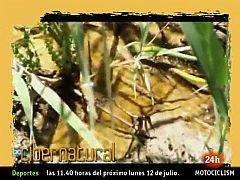 Natural - El microcosmos de las Tablas de Daimiel