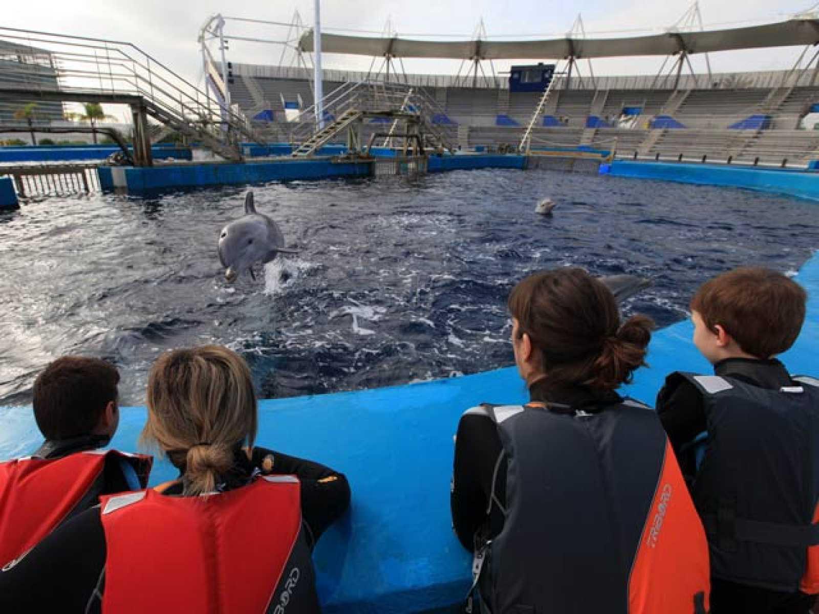 Delfinoterapia para combatir el autismo en el Oceanogràfic de Valencia