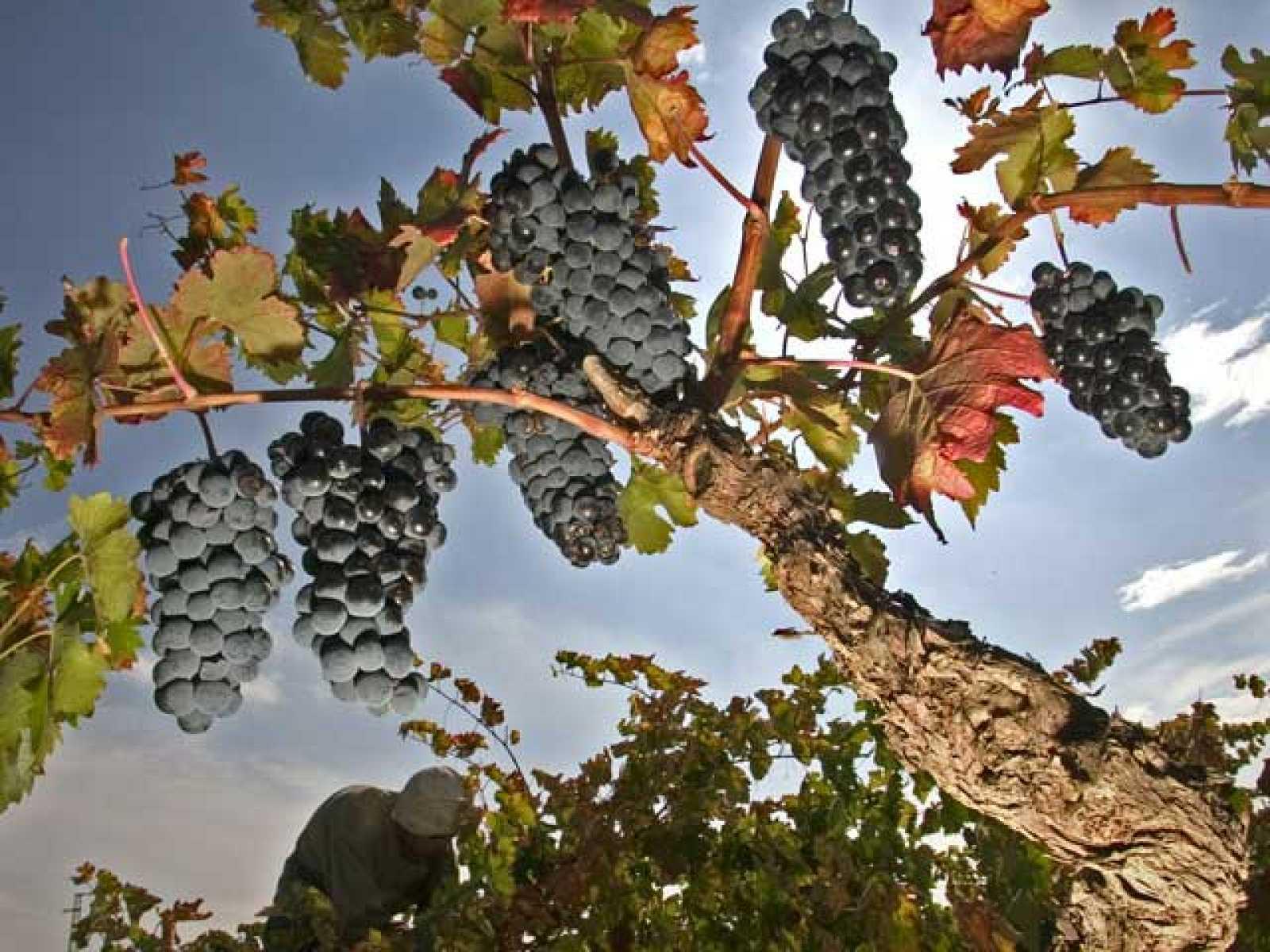 Comando Actualidad: De vinos  (13/10/10)