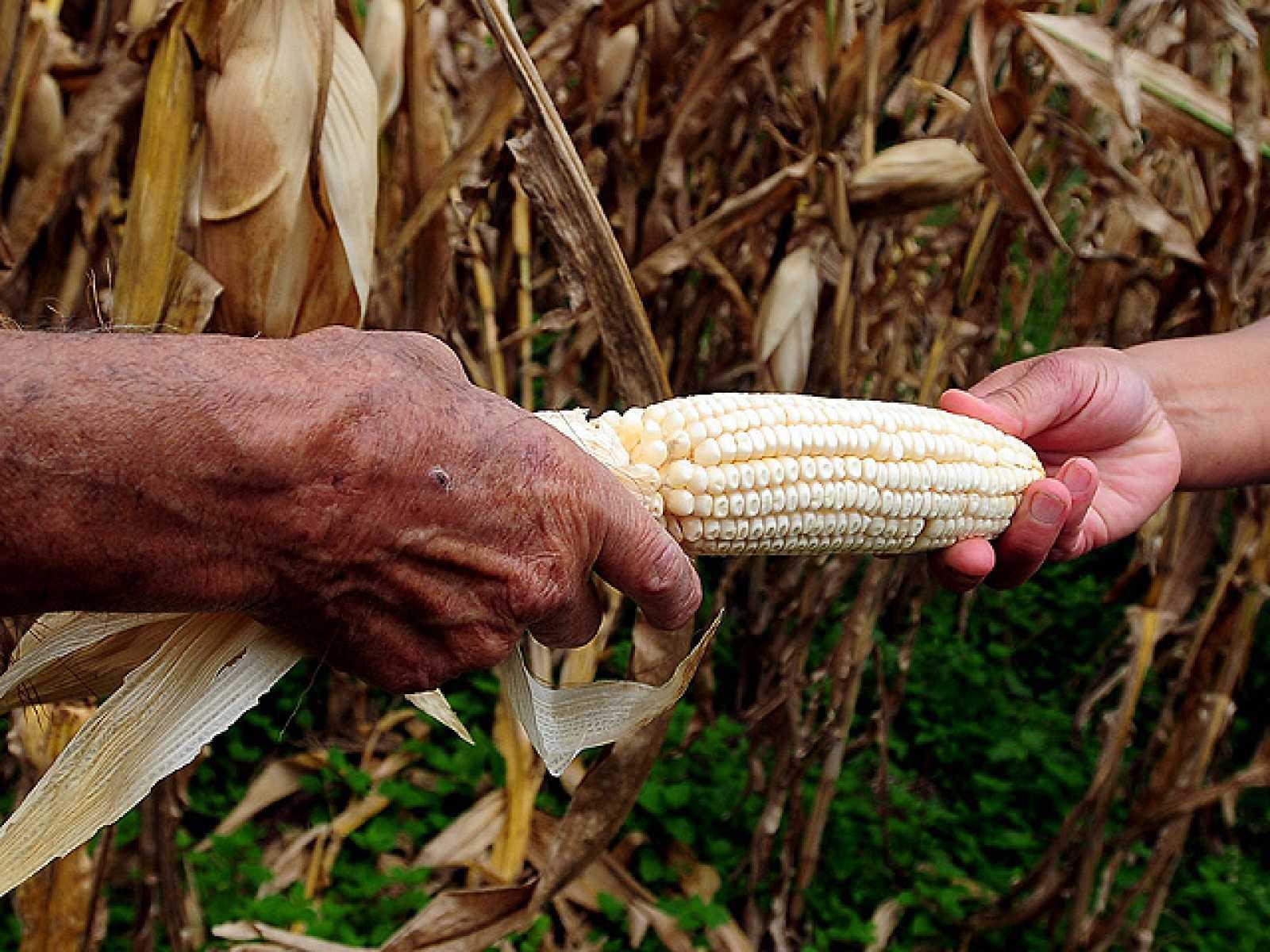 Informe Semanal: Unidos contra el hambre