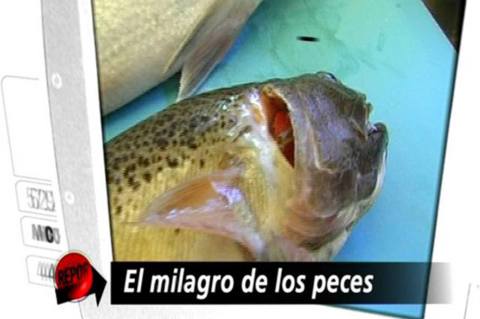 Repor: El milagro de los peces (19/10/10)