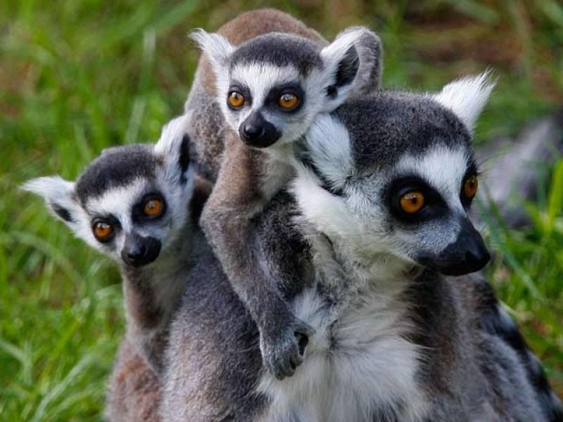 La quinta parte de los animales vertebrados están en peligro de extinción